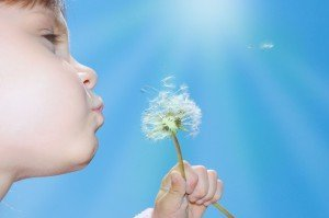 child blowing away dandelion seeds in the blue sky